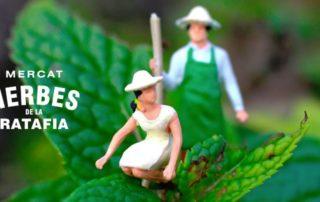 6è Mercat de les Herbes de la Ratafia Santa Coloma de Farners